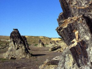 0 Foresta fossile